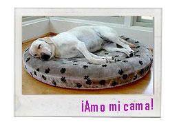 Gana una hermosa cama para tu mejor amigo!